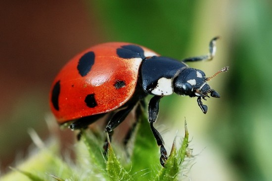 Annual Lady Bug Release Charleston