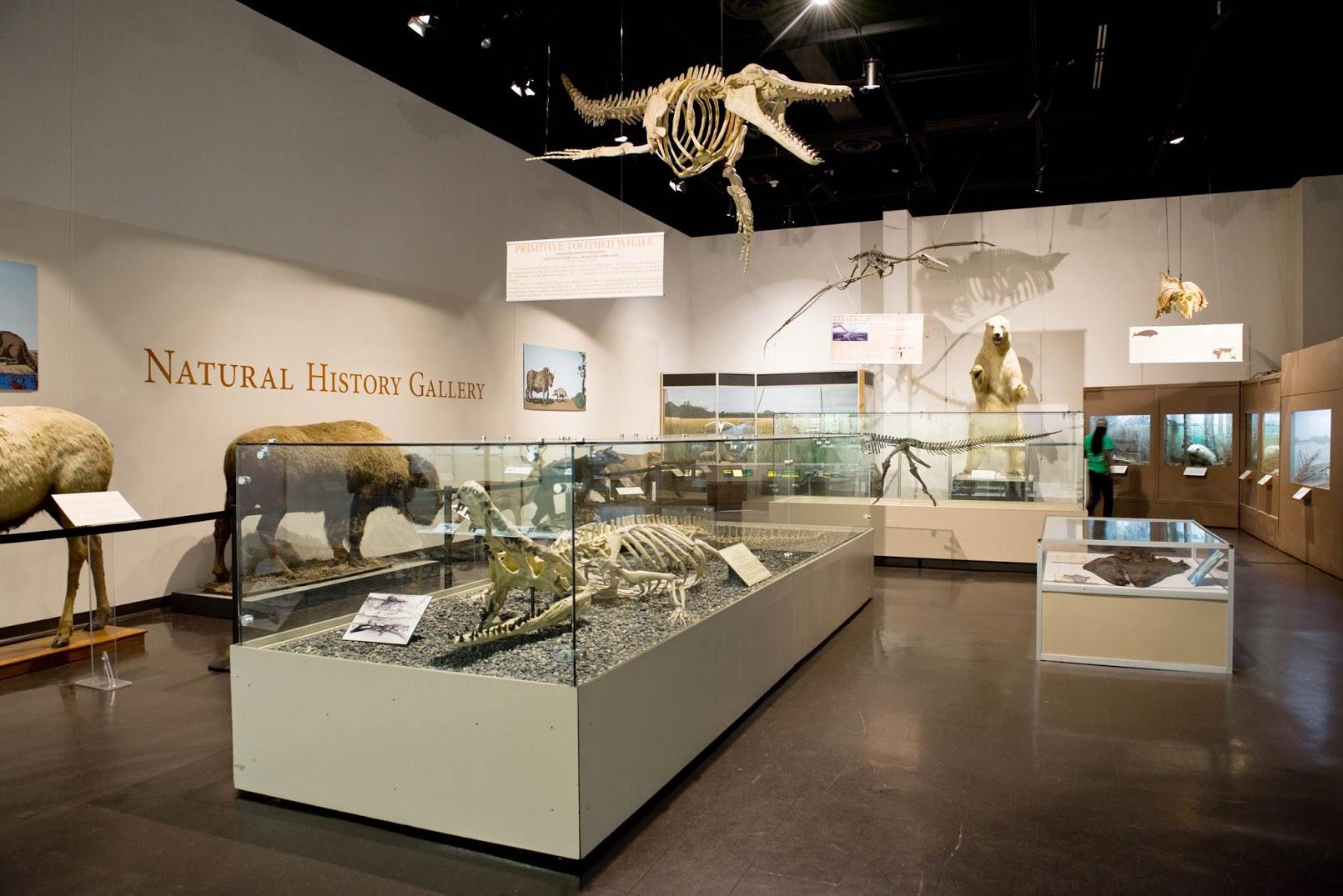 Charleston Museum Natural History
