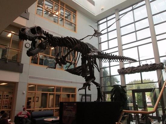 Mace Brown Museum of Natural History