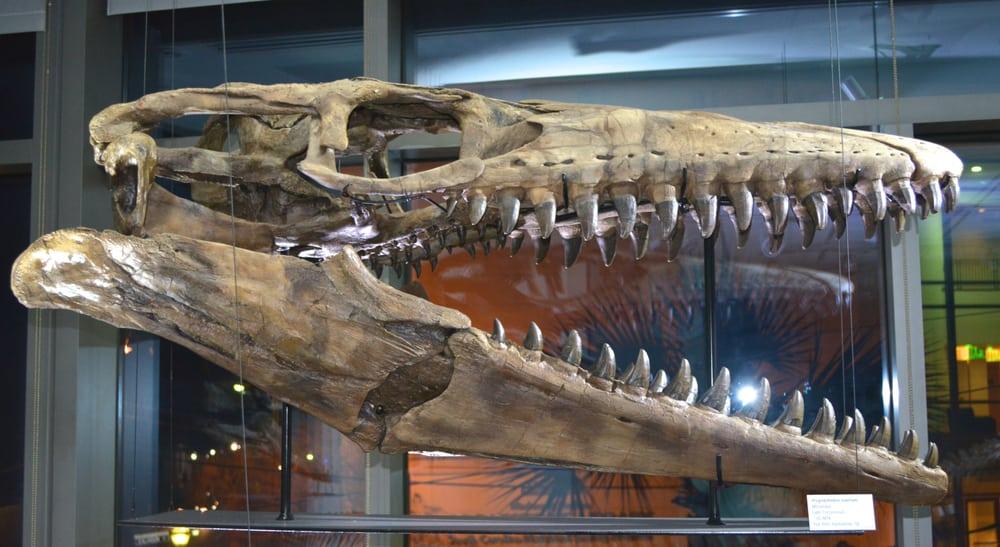 Mace Brown Museum of Natural History Charleston SC