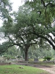 Magnolia Cemetery Charleston SC