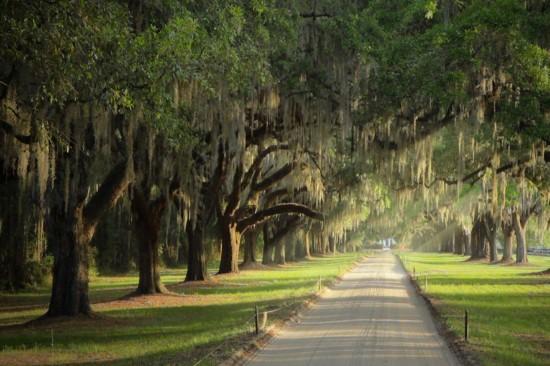 Charleston SC Plantations