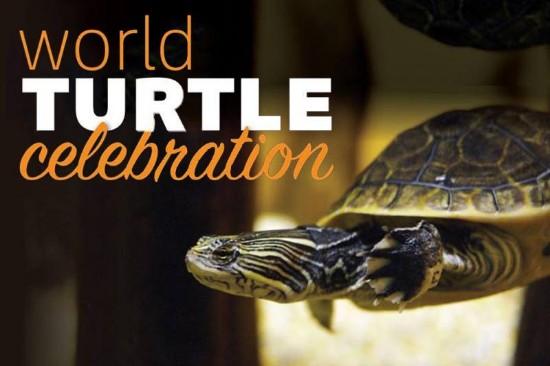 Charleston World Turtle Celebration